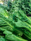 绿色菜品种在市场上 库存照片