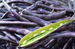 紫色菜豆 库存图片