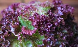 紫色菜 库存照片