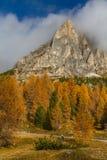 黄色落叶松属和白云岩Passo Falzarego,意大利 免版税图库摄影