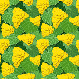 黄色葡萄和叶子 库存照片
