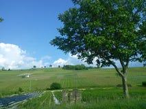 绿色葡萄园在法国 免版税库存照片