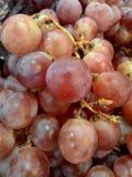 紫色葡萄 库存照片