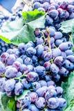 紫色葡萄 免版税库存照片