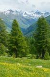 在夏天山坡的黄色蒲公英花 免版税库存照片