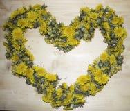 黄色蒲公英的许多芽的背景 免版税库存图片