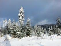 黑色蓝色人行道照片风景定了调子空白冬天森林 免版税库存图片