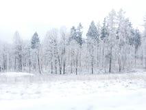 黑色蓝色人行道照片风景定了调子空白冬天森林 免版税图库摄影
