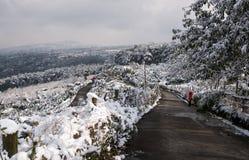黑色蓝色人行道照片风景定了调子空白冬天森林 库存图片