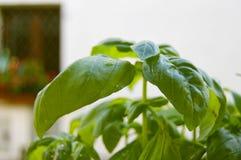 绿色蓬蒿植物 免版税库存图片
