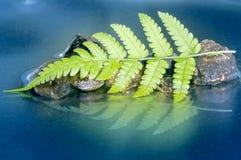 绿色蕨叶子反射 免版税库存图片