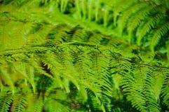 绿色蕨叶子焦点的关闭在雨林展示的构造与选择聚焦和被定调子的颜色和黑暗背景 免版税库存图片