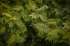 绿色蕨在公园离开在雨以后 免版税库存图片