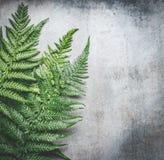 绿色蕨在灰色土气具体背景,顶视图离开 免版税库存照片