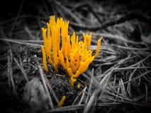 黄色蘑菇 免版税库存图片