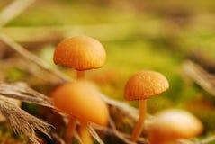 黄色蘑菇shooted在春天植物 免版税库存图片