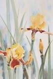 黄色虹膜水彩 库存图片