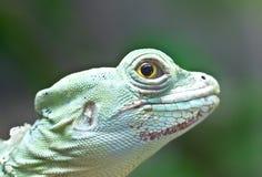 绿色蛇怪蜥蜴。 库存图片