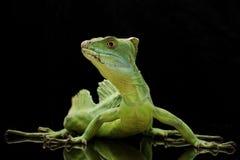 绿色蛇怪 免版税库存图片