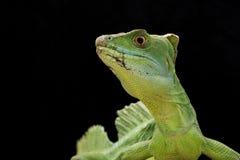 绿色蛇怪 图库摄影