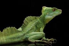 绿色蛇怪 免版税库存照片