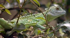 绿色蛇怪8 免版税库存图片