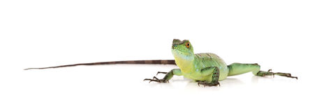 绿色蛇怪 库存图片