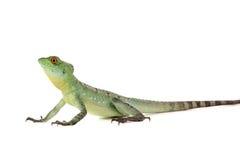 绿色蛇怪 免版税图库摄影