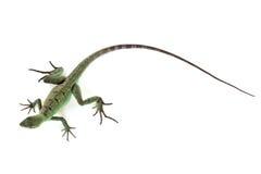 绿色蛇怪 库存照片