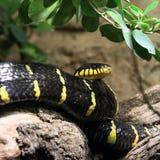黑色蛇黄色 免版税库存图片