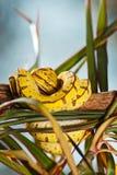 黄色蛇 库存照片