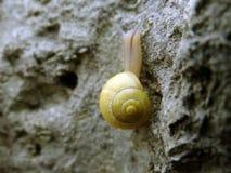 黄色蜗牛 免版税库存图片
