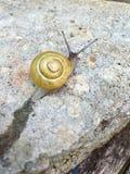 黄色蜗牛 免版税库存照片