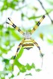黑色蜘蛛黄色 免版税库存图片