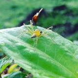 绿色蜘蛛 免版税图库摄影