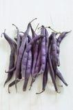 紫色蜡云豆 库存图片