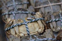 黑色螃蟹 免版税库存图片