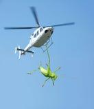 绿色蟋蟀和直升机 库存图片