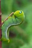 绿色蠕虫蠕动 图库摄影