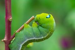 绿色蠕虫蠕动 库存照片