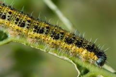 黄色蠕虫 免版税库存图片