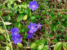 紫色行星 库存图片