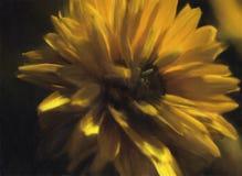 黄色被绘的花 库存图片
