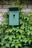 绿色被绘的鸟舍和藤 库存照片