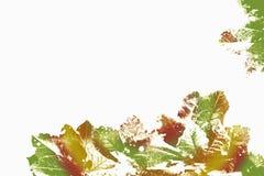 黄绿色被仿造的叶子 免版税库存图片
