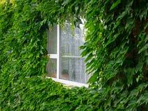 绿色视窗 免版税库存照片
