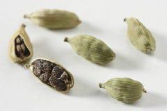 绿色豆蔻果实-一个普遍的印地安香料 免版税库存图片