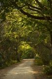 绿色路径 库存照片