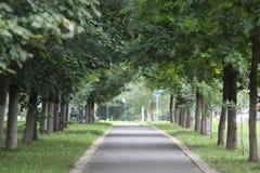 绿色路 库存照片