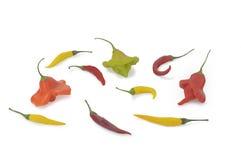 黄色辣椒和辣胡椒(特立尼达蝎子) isolatad在白色 免版税库存图片